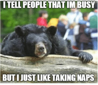 Confession Bear: ITELL PEOPLE THAT IMBUSY  BUT  IJUST LIKE TAKING NAPS