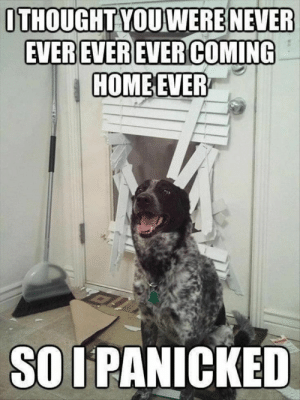 39 Hilarious Memes Thatll Make You Lose It 36: ITHOUGHT YOU WERE NEVER  HOMEEVER  SO I PANICKED 39 Hilarious Memes Thatll Make You Lose It 36