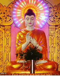 """Memes, Shark, and Buddha: Iti """"There is no fire like passion, there is no shark like hatred, there is no snare like folly, there is no torrent like greed.""""   ~ The Buddha ~"""