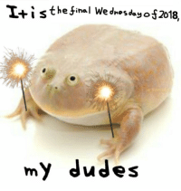 Wednesday, It Is Wednesday My Dudes, and My-Dudes: Iti s thefinal Wednesday 012018,  my dudes It is Wednesday, my dudes