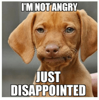Made a new one... Disappointed Dachshund: ITM NOTANGRY  UST  DISAPPOINTED Made a new one... Disappointed Dachshund