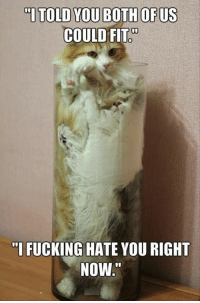 """Fucking, Funny, and Animal: """"ITOLD YOU BOTH OF US  COULD FIT  """"I FUCKING HATE YOU RIGHT  NOW Funny+Animal+Pictures+Of+The+Day+-+24+Pics #funnycat"""
