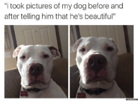"""Before and After, Beauty-Memes, and Beautiful-Meme: 'itook pictures of my dog before and  after telling him that he's beautiful""""  Memes CONM"""