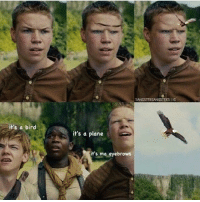 it's a bird  SANGSTERGANGSTERSIIG  it's a plane  it's ma eyebrows 😂😂😂😂😂 ▶ follow @brockpierson for more funny stuff