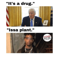 """Drugs, Memes, and News: """"It's a drug.""""  """"Issa plant.""""  FLIX  NEWS & MUSIC"""