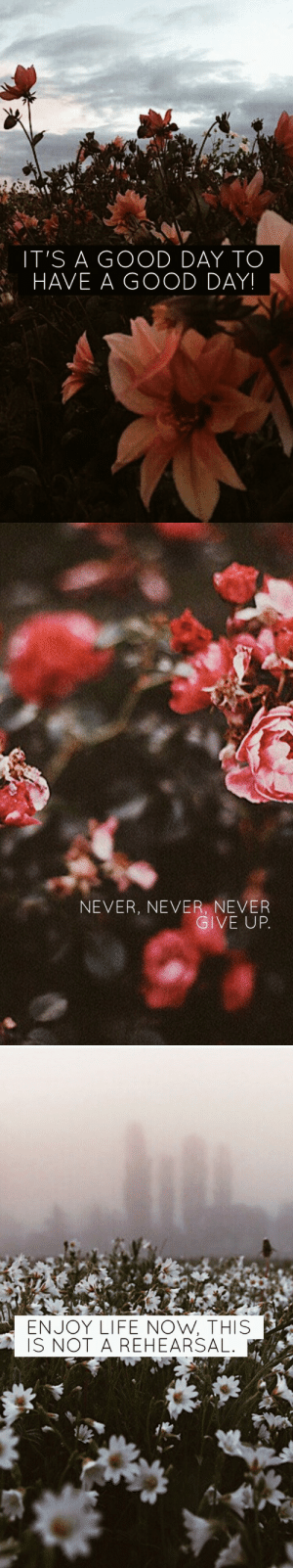 Life, Good, and Never: IT'S A GOOD DAY TO  HAVE A GOOD DAY!   NEVER, NEVER, NEVER  GIVE UP   ENJOY LIFE NOW, THIS  IS NOT A REHEARSAL