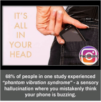 Head, Memes, and Phone: IT'S  ALL  YOUR  HEAD  Fact Point  68% of people in one study experienced  phantom vibration syndrome  a sensory  hallucination where you mistakenly think  your phone is buzzing. I felt it several times 😝