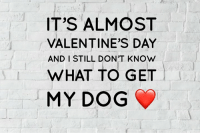 🐕 ❤️: IT'S ALMOST  VALENTINE'S DAY  AND I STILL DON'T KNOW  WHAT TO GET  MY DOG 🐕 ❤️