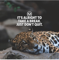 Journey, Memes, and Break: IT'S ALRIGHT TO  TAKE A BREAK  JUST DON'T QUIT. It's OK to take a break, catch your breath and gather yourself before you set out on the next stage of your journey.✔️ - takeabreak keepgoing hustle push millionairementor
