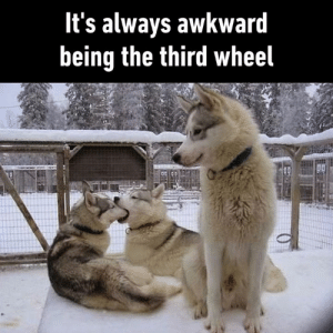 Can I please go now?: It's always awkward  being the third wheel Can I please go now?