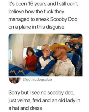 John Cena, Scooby Doo, and Sorry: It's been 16 years and I still can't  believe how the fuck they  managed to sneak Scooby Doo  on a plane in this disguise  @BestMemes  @gothicdogsclub  Sorry but I see no scooby doo,  just velma, fred and an old lady in  a hat and dress THE NEW JOHN CENA
