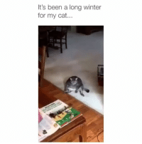 Memes, Struggle, and Winter: It's been a long winter  for my cat.. The struggle is all too real 😂 Credit: @lookitsleilani