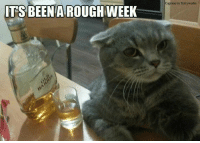 Memes, Woes, and Rough: ITS BEEN A ROUGH WEEK  Caption by Kittyworks Woe is me!