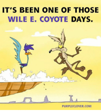 wile e coyote: IT'S BEEN ONE OF THOSE  WILE E. COYOTE  DAYS.  PURPLE CLOVER, COM