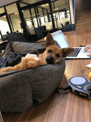 Work, Today, and Been: It's been really hard to be productive at work today