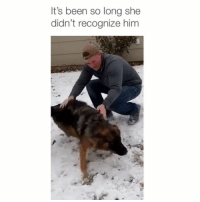 Dogs, Memes, and Never: It's been so long she  didn't recognize him Dogs never forget 😍 Credit: @apetersilka