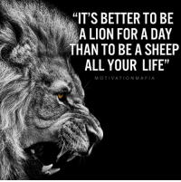 """Life, Memes, and Lion: """"IT'S BETTER TO BE  A LION FOR A DAY  THAN TO BE A SHEEP  ALL YOUR LIFE""""  MOTIVATIONMAFIA Be the greatest you can be today. Tomorrow is not promised."""