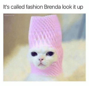 Caturday, Fashion, and Memes: It's called fashion Brenda look it up  edabmoms 20 Cat Memes That Are The Purrfect Addition To Your Caturday Routine - I Can Has Cheezburger?