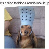 You guys doubled my follows I'm so happy 😂😂😂 EDIT: 500! YAY THANK YOU meme memes memepost memeposts funny funnymeme funnymemes funnypost funnyposts it's called fashion Brenda look it up lmao: It's called fashion Brenda look it up You guys doubled my follows I'm so happy 😂😂😂 EDIT: 500! YAY THANK YOU meme memes memepost memeposts funny funnymeme funnymemes funnypost funnyposts it's called fashion Brenda look it up lmao