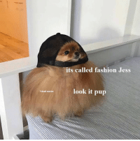 Fashion, Memes, and Cloud: its called fashion Jess  look it pup  cloud matter Bamboozled follow @9gagcute