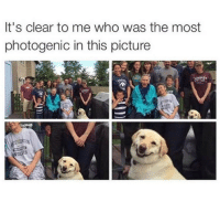 Funny, Girl Memes, and Photogenic: It's clear to me who was the most  photogenic in this picture No brainer (follow @friendofbae if you're not already)