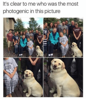 Dank, Memes, and Target: It's clear to me who was the most  photogenic in this picture  ES meirl by FlorenceFrida MORE MEMES