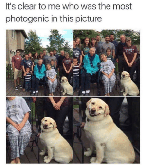 Who is Photogenic? by kajri FOLLOW HERE 4 MORE MEMES.: It's clear to me who was the most  photogenic in this picture  ES Who is Photogenic? by kajri FOLLOW HERE 4 MORE MEMES.