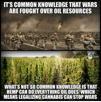 Facebook, Memes, and News: ITS COMMON KNOWLEDGE THAT WARS  ARE FOUGHTOVEROIL RESOURCES  Thought  WHATS NOT SO COMMON KNOWLEDGE IS THAT  HEMP CAN DOEVERYTHINGOIL DOES WHICH  MEANS LEGALIZINGCANNABIS CAN STOP WARS 💭 If we want a more peaceful world it's time to EndTheDrugWar! ✌️ Join Us: @TheFreeThoughtProject 💭 TheFreeThoughtProject Hemp 💭 LIKE our Facebook page & Visit our website for more News and Information. Link in Bio... 💭 www.TheFreeThoughtProject.com