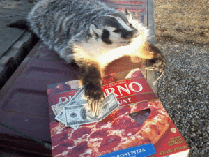 sarahshahipls:I'm not sure what kind of luck the $115 frozen pizza badger is supposed to bring but I'm not taking any chances: IT's DIGIORNO  NO  KEEP FROZENS  RONI PIZZA  ET NT 28302 (1B 123 02 809 sarahshahipls:I'm not sure what kind of luck the $115 frozen pizza badger is supposed to bring but I'm not taking any chances