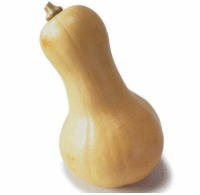 It's Drake except his head, torso, legs and arms are a butternut squash: It's Drake except his head, torso, legs and arms are a butternut squash