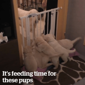 This dog knows how to discipline her puppies better than most humans! 😂  Credit: ViralHog: It's feeding time for  these pups This dog knows how to discipline her puppies better than most humans! 😂  Credit: ViralHog