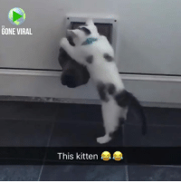 Memes, 🤖, and Gone: ITS  GONE VIRAL  This kitten