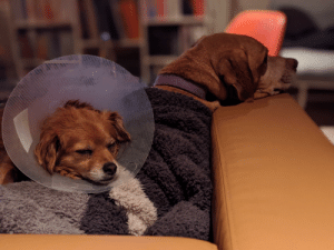 It's gonna be a long stretch in this cone, but Carmen has a sister she can lean on.: It's gonna be a long stretch in this cone, but Carmen has a sister she can lean on.