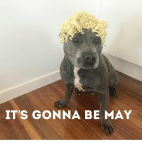 It only comes once a year. Justin Timberlake via @the_blueboys: IT'S GONNA BE MAY It only comes once a year. Justin Timberlake via @the_blueboys