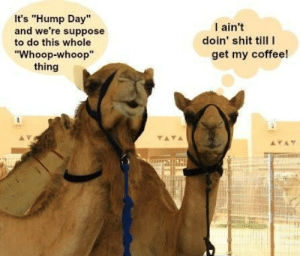 """Hump Day, Meme, and Shit: It's """"Hump Day""""  and we're suppose  I ain't  doin' shit till  get my coffee!  to do this whole  """"Whoop-whoop""""  thing  YAYA  AYAT Hump Day Coffee Meme   morning   Pinterest   Wednesday coffee ..."""