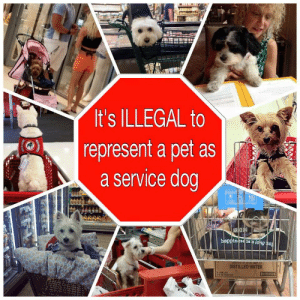 Dogs, Facebook, and Rambo: It's ILLEGAL to  represent a pet as  a service dog  SERUICE  inessis a long ha  DISTILLED WATER rambo-psych-service-dog: How can you tell the fakes from the real working dogs? 1. If the dog is confined or has restricted body movement due to being in a carrier, stroller or shopping cart, it is unable to physically preform tasks in order to aid their disabled handler. 2. If the dog exhibits poor behavior and the handler isn't trying to correct it or isn't removing the dog. 3. If the dog is entirely focused on interacting with its environment, it cannot be focused on aiding it's handler. Certification, ID tags and vests don't make a service dog. A dog is considered a service dog when it is trained to physically do something (performs a task or work) in relation to the handlers disability. The dog must be doing something for you, that you cannot do for yourself. (The law does NOT recognize 'emotional support' or 'comforting' to be trained tasks) Credit:   Assistance Dogs of the Carolinas