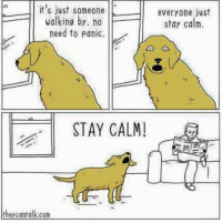 Dank, Logic, and Twitter: it's just someone  everyone just  walking by no  stay calm.  need to panic.  STAY CALM!  they can talk.com Dog logic  My Twitter: @GiveMeInternet