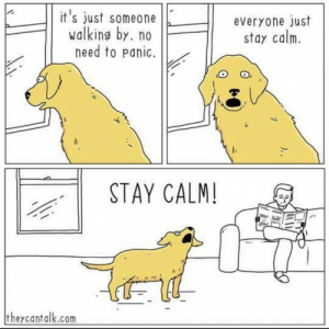 Dog, Com, and Stay: it's just someone  walking by. no  need to panic.  everyone just  stay calm.  STAY CALM!  theycantalk.com Is this just every dog's mentality??