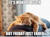 Friday, Memes, and Monday: ITS MONDAY AGAIN  BUT FRIDAY JUST ENDED  imgiip.com