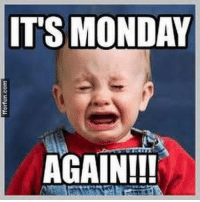 Memes, Monday, and 🤖: ITS MONDAY  AGAIN!!! We hate you Monday! monday