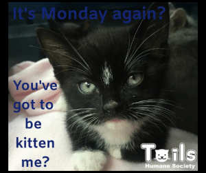 Amazon, Love, and Memes: It's Monday again?  You've  got to  be  kitten  Tails  me?  Humane Society Do you have a case of the Mondays? Viper, a current Tails foster kitten understands how you feel. Why not brighten his day (and yours) by donating to the Baby Shower! Just drop off your donation of kitten, puppy or little critter supplies to our shelter lobby or simply visit our Amazon Wish list here: https://www.amazon.com/hz/wishlist/ls/1SQ2QO3SJZSSC/ref=cm_go_nav_hz   Love kittens? Want to help us save more lives? Find out more about fostering here: www.TailsHumaneSociety.org/foster