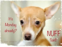 It's Monday again, nuff said           BOL   #dog  Good Morning All, have a great day: It's  Monday  already?  NUFF  Said! It's Monday again, nuff said           BOL   #dog  Good Morning All, have a great day