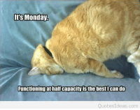 Its Monday.  Functioning at half capacityisthe best Ican do  QuotesIdeas com Auntie Mary came by wit da Monday funny and wishes fur da Happy Manic Monday!!!  :)