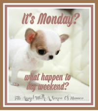 Good morning!  HAPPY MONDAY!!: Its Monday?  hat happer t  yrweekend?  amor Good morning!  HAPPY MONDAY!!