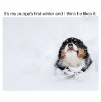 Memes, Winter, and 🤖: It's my puppy's first winter and I think he likes it. Follow @teamnobadtimes if you enjoy adorableness like this 💕🙋🏽💯