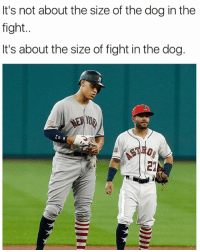 David vs Goliath status.. . . . MLB Altuve Judge SideBySide MatchUp Short Vs Tall Baseball BallPlayer: It's not about the size of the dog in the  fight..  It's about the size of fight in the dog.  Yo David vs Goliath status.. . . . MLB Altuve Judge SideBySide MatchUp Short Vs Tall Baseball BallPlayer