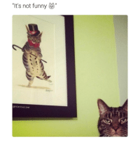 Funny, Ted, and Not Funny: It's not funny  @hilarious ted At all (@hilarious.ted)