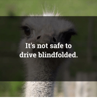 obviousostrich: It's not safe to  drive blindfolded obviousostrich