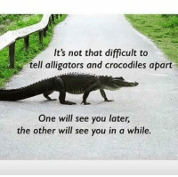 See you later alligator, See you in a while crocodile 😂🐊: It's not that difficult to  tell alligators and crocodiles apart  One will see you later,  the other will see you in a while. See you later alligator, See you in a while crocodile 😂🐊