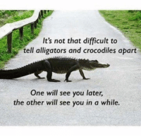 Puns, Twitter, and One: It's not that difficult to  tell alligators and crocodiles apart  One will see you later,  the other will see you in a while. Insta: @punsonly Twitter: @puns_only